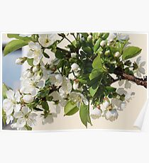 White Sea of Blossoms Poster
