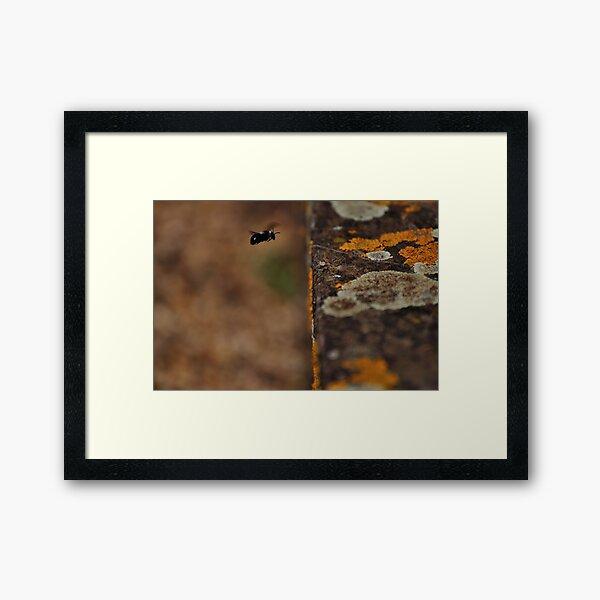 I Lichen Black and White Bees... Framed Art Print