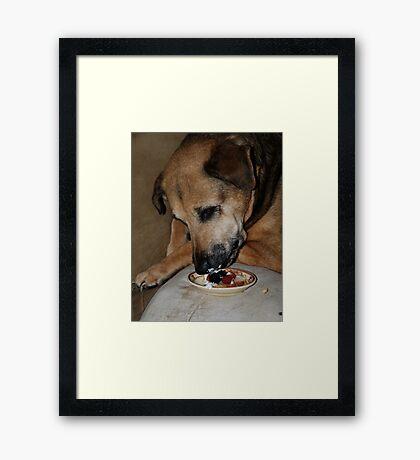 Shortcake Framed Print