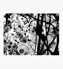 The Chocolate Vine Photographic Print
