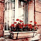 Windows of Paris by Rene Hales