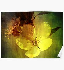 Fading Blossom Poster