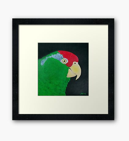 Green Cheeked Amazon Parrot Framed Print