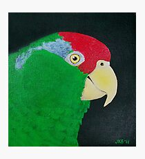 Green Cheeked Amazon Parrot Photographic Print