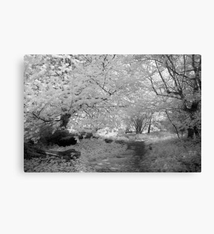 Woodland Path - Infrared Canvas Print