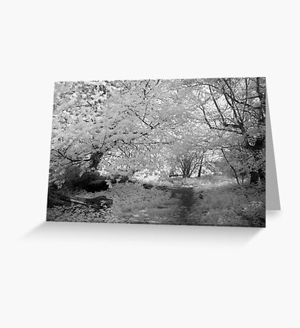Woodland Path - Infrared Greeting Card