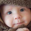 Baby Bear by Peter Bellamy