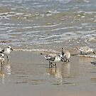 Sand Pipers by zzsuzsa