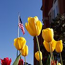 Yellow Tulips - Oxford, MS by Jimmy Durham