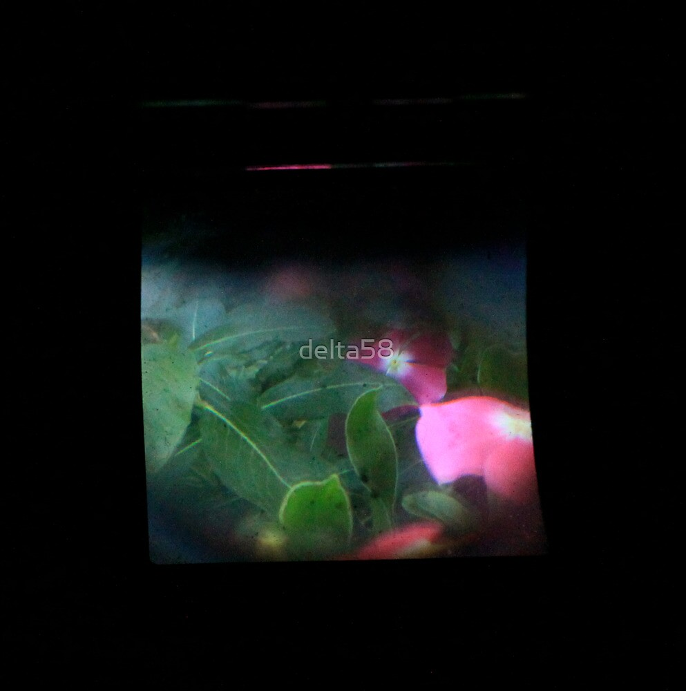 TTV Image ( Through The Viewfinder)#9 by delta58