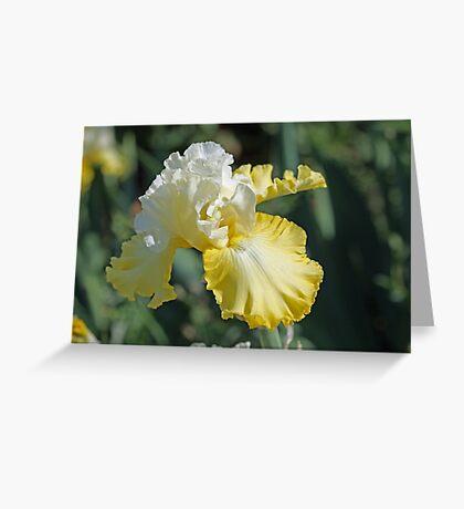 Overjoyed Iris Greeting Card