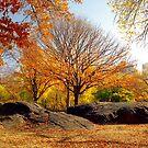 Autumn in Central Park  by Alberto  DeJesus