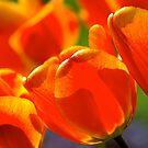 a spring blaze... by Allan  Erickson