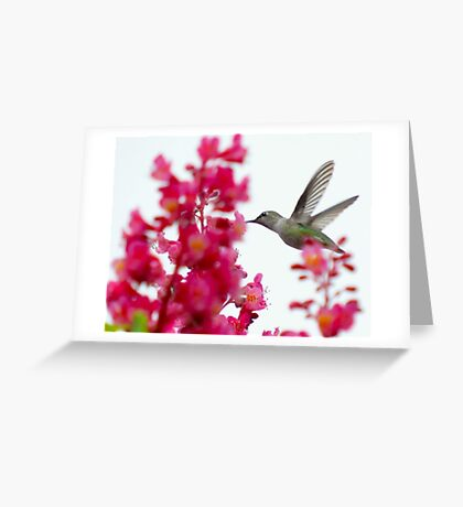 hummingbird on the wing 4 Greeting Card