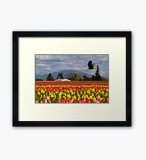 Bald Eagle crossing a Tulip Field Framed Print