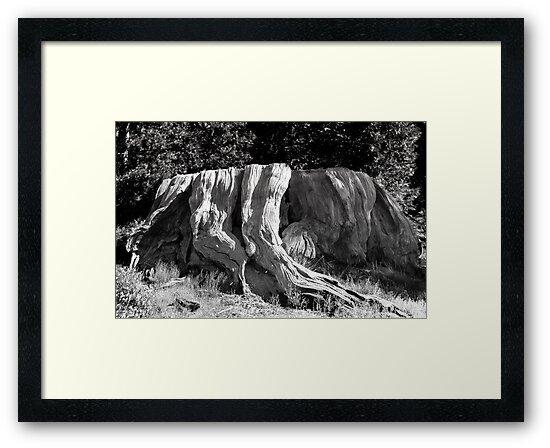 Mark Twain Stump by Alex Preiss