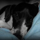 Sleepy Freckles by Cathie Trimble