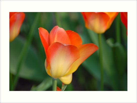 Orange Beauty by vbk70