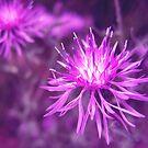 Purple Passion by Janice Dunbar