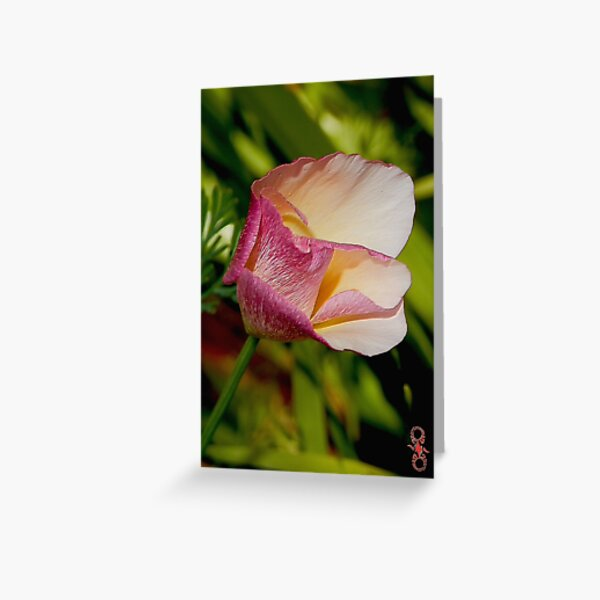 California Poppy with Pink Accents by tasmanianartist Greeting Card