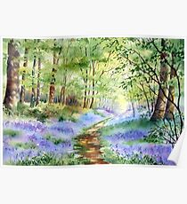 Bluebells in Bunny Wood Poster