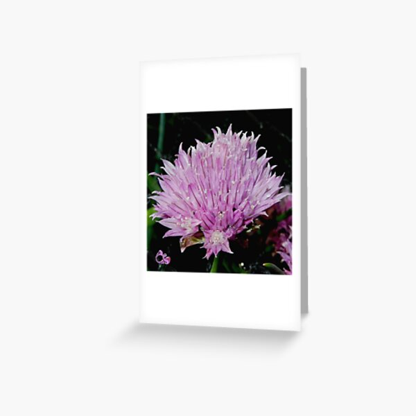 Chive Flower by tasmanianartist Greeting Card