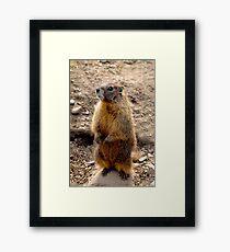 Marmot Standup Framed Print