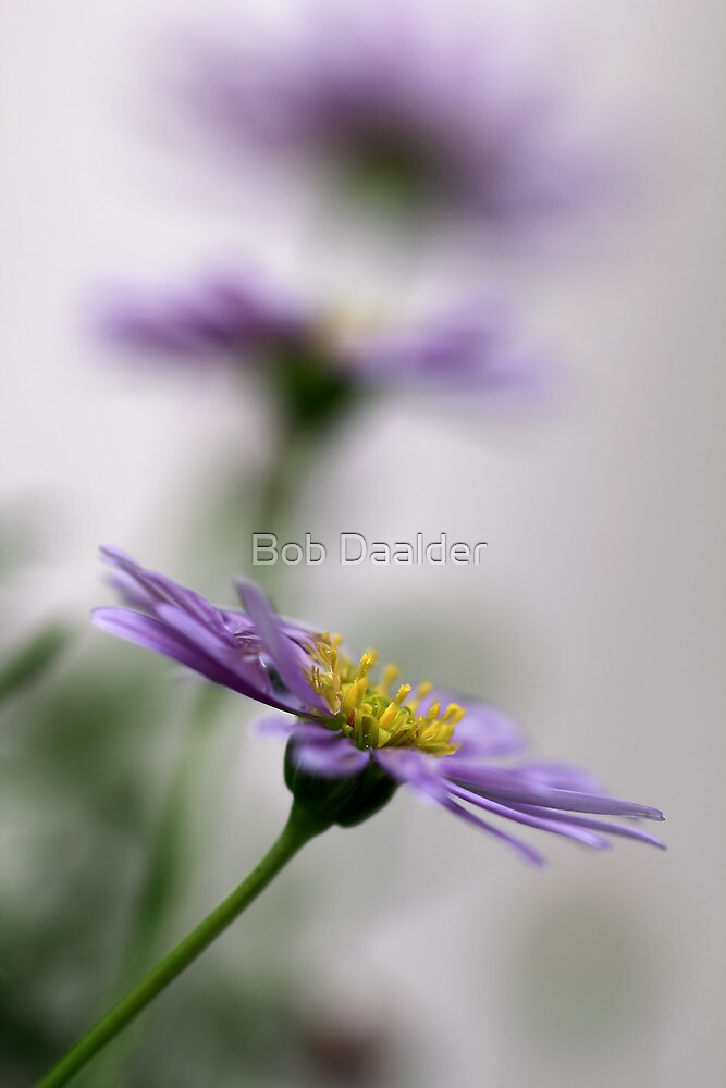Just a flower *2*.... (I don't know anything about them, but I like them) by Bob Daalder