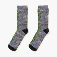 Ivy auf Holz Tapete Socken