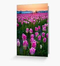 Skagit Dawn Greeting Card