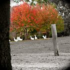 candid geese by Becca7