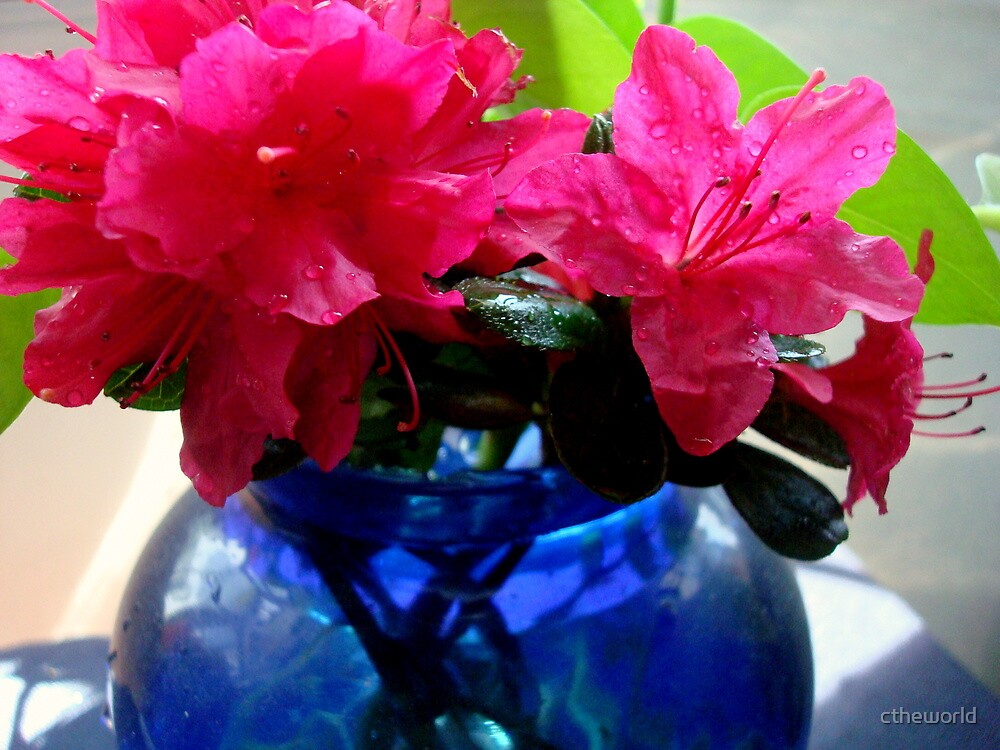 Azaleas in Blue Vase by ctheworld