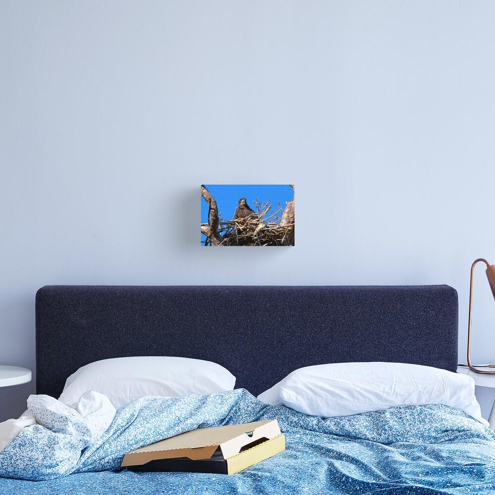 Fledgling Bald Eagle in Nest Canvas Print