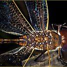 Dragonfly 1 by wildrider58