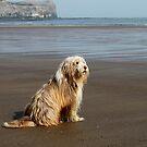 Sea Dog. by Irene  Burdell