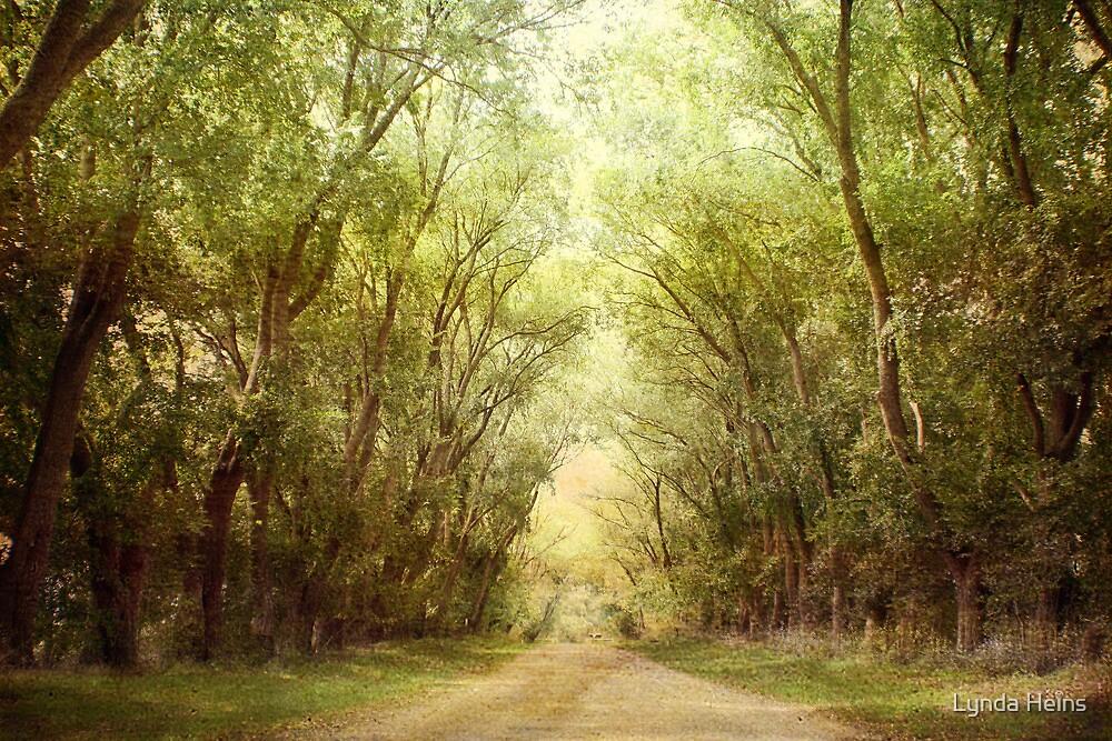 ~ In Autumn Light ~ by Lynda Heins