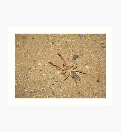 Sunspider (Windscorpion, Camel Spider) Art Print