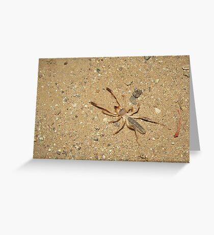 Sunspider (Windscorpion, Camel Spider) Greeting Card