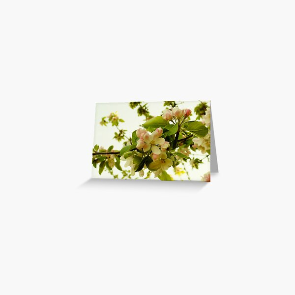 Apple Blossom on White Greeting Card