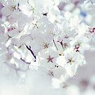 white spring by tangleduptight