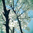 white spring II by tangleduptight