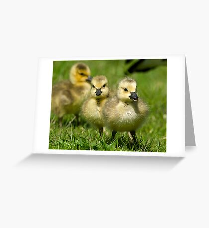 Sibling Revelry Greeting Card