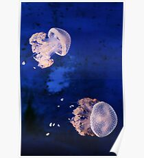 Jellyfishes Poster