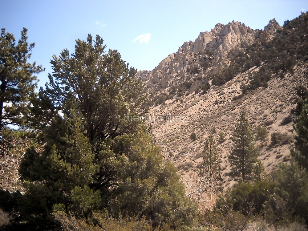 Shades Of The Sierras by marilyn diaz