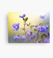 Springtime Colour Canvas Print