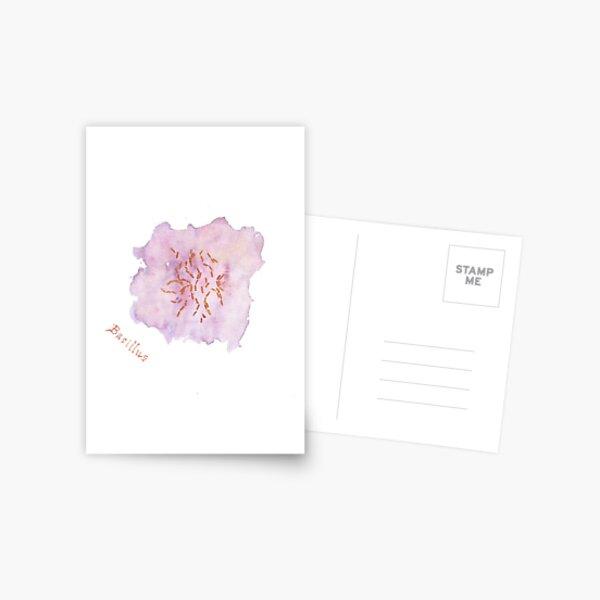 Bacillus Greeting Card Postcard