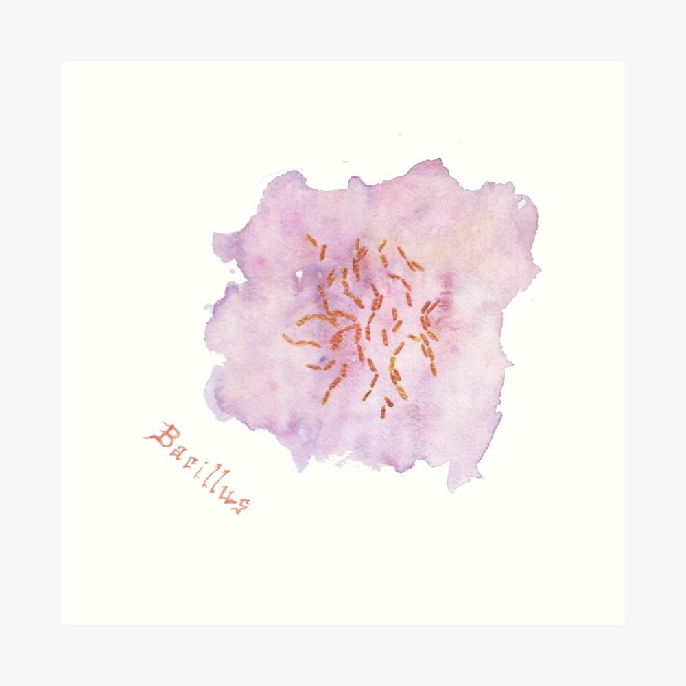 Bacillus Art Prints Art Print