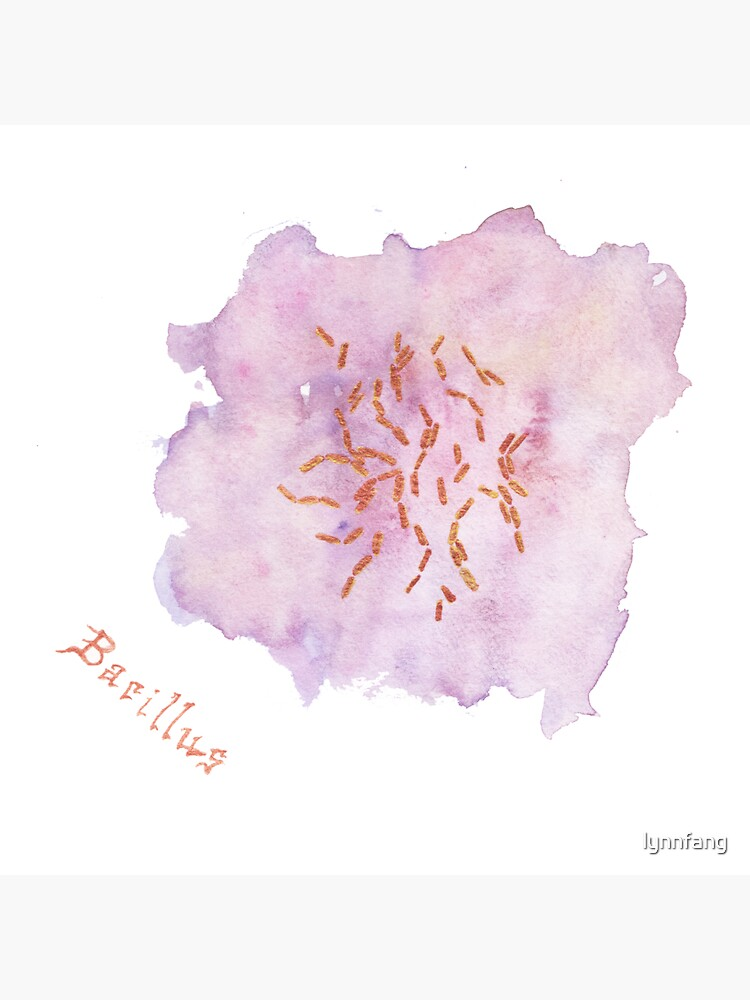 Bacillus Art Prints by lynnfang