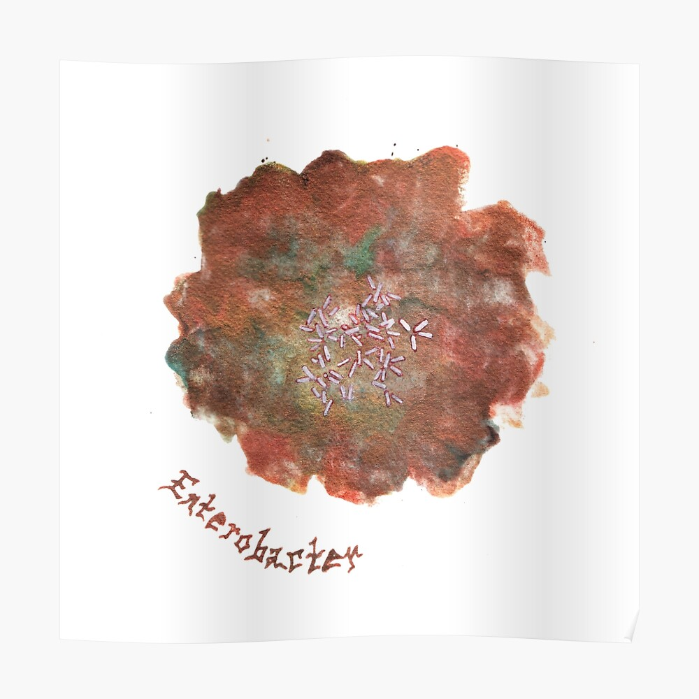 Enterobacter Art Prints Poster