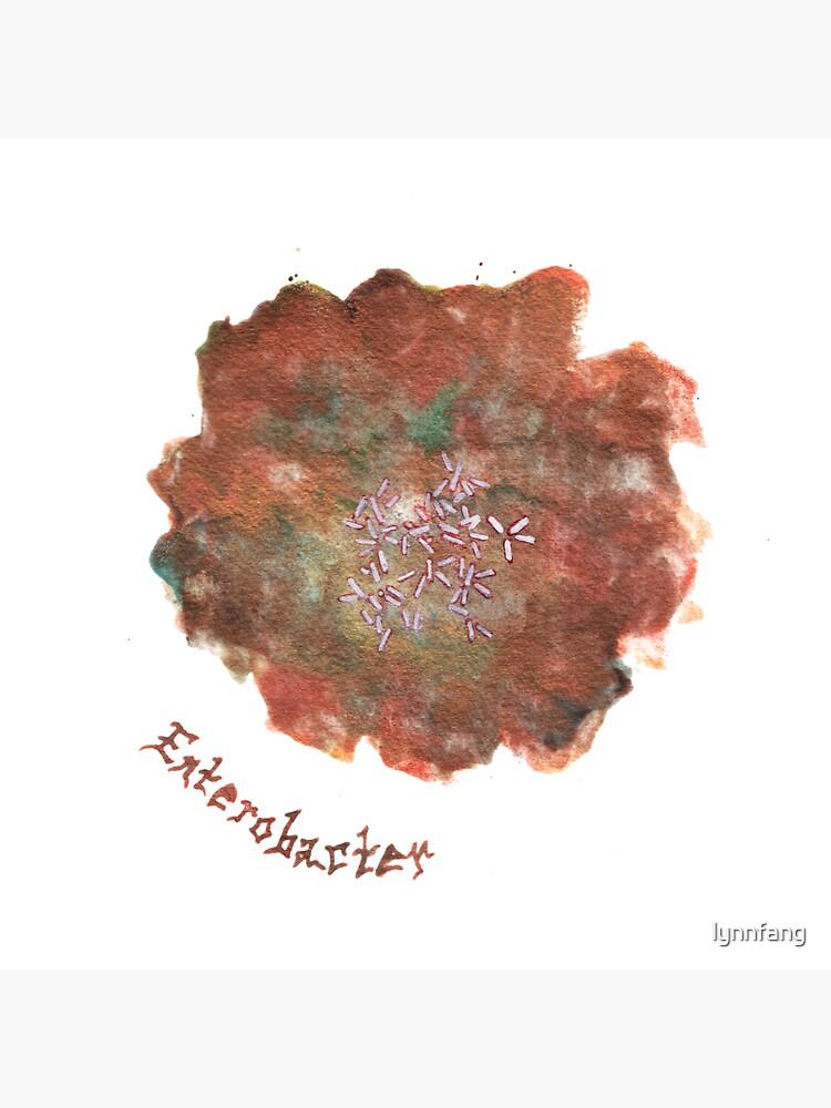 Enterobacter Art Prints by lynnfang